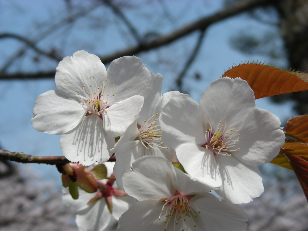 桜・円山、真如、哲学 112