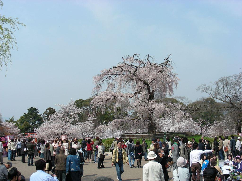 桜・円山、真如、哲学 056
