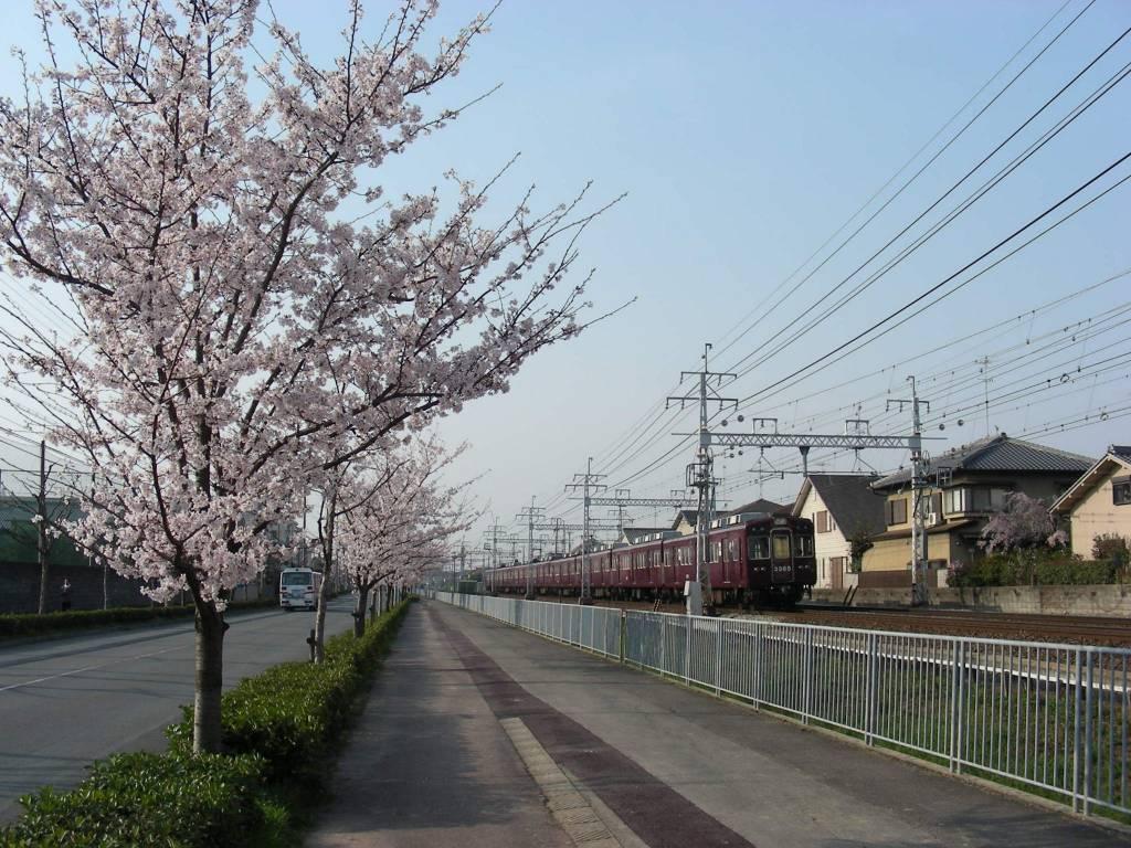 桜・円山、真如、哲学 004