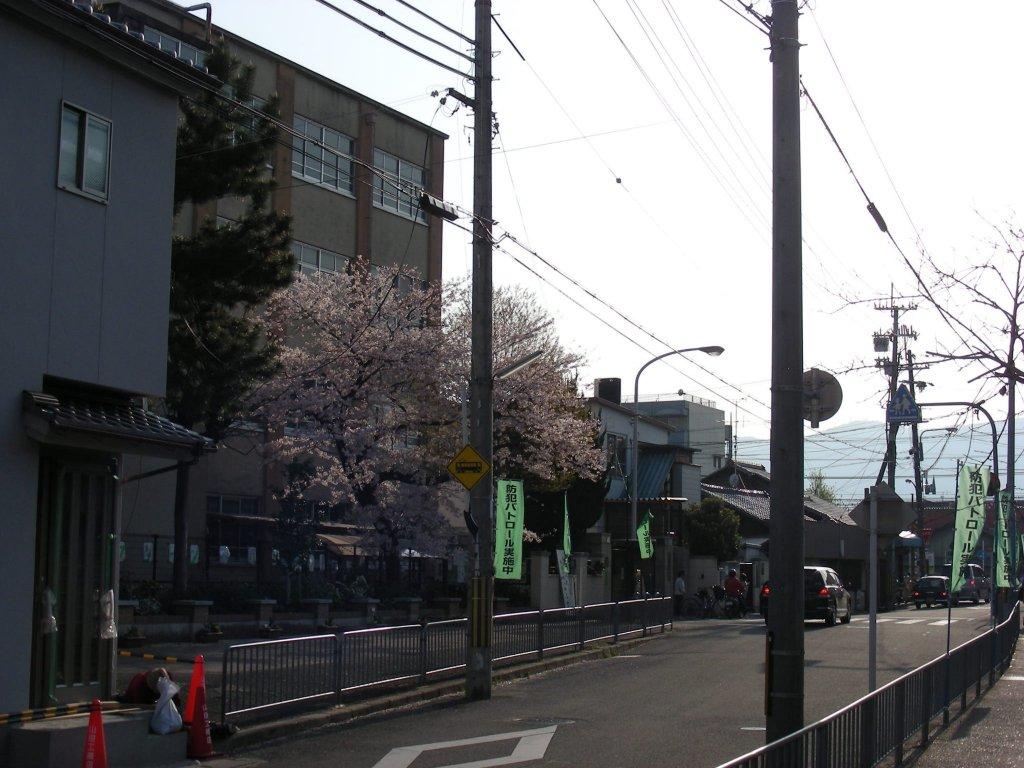 桜・円山、真如、哲学 311