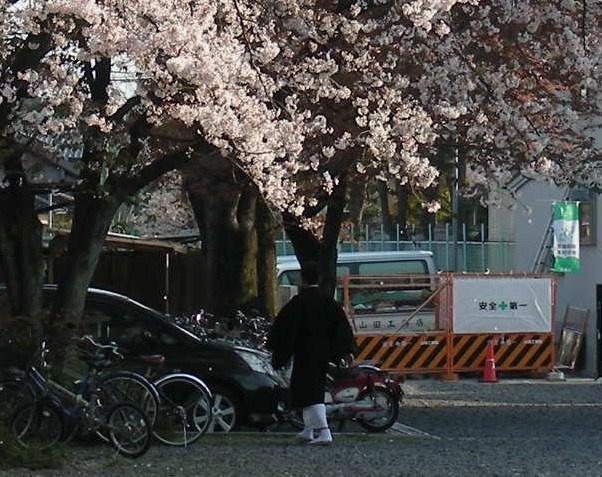 桜・円山、真如、哲学 305 - コピー