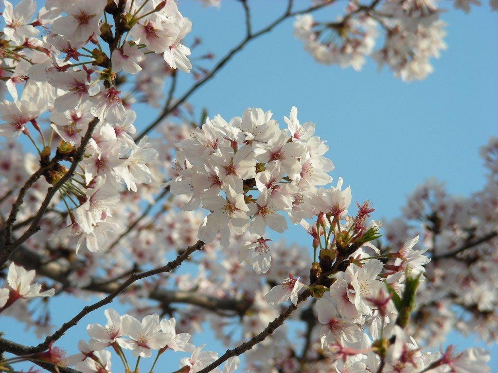 桜・円山、真如、哲学 304
