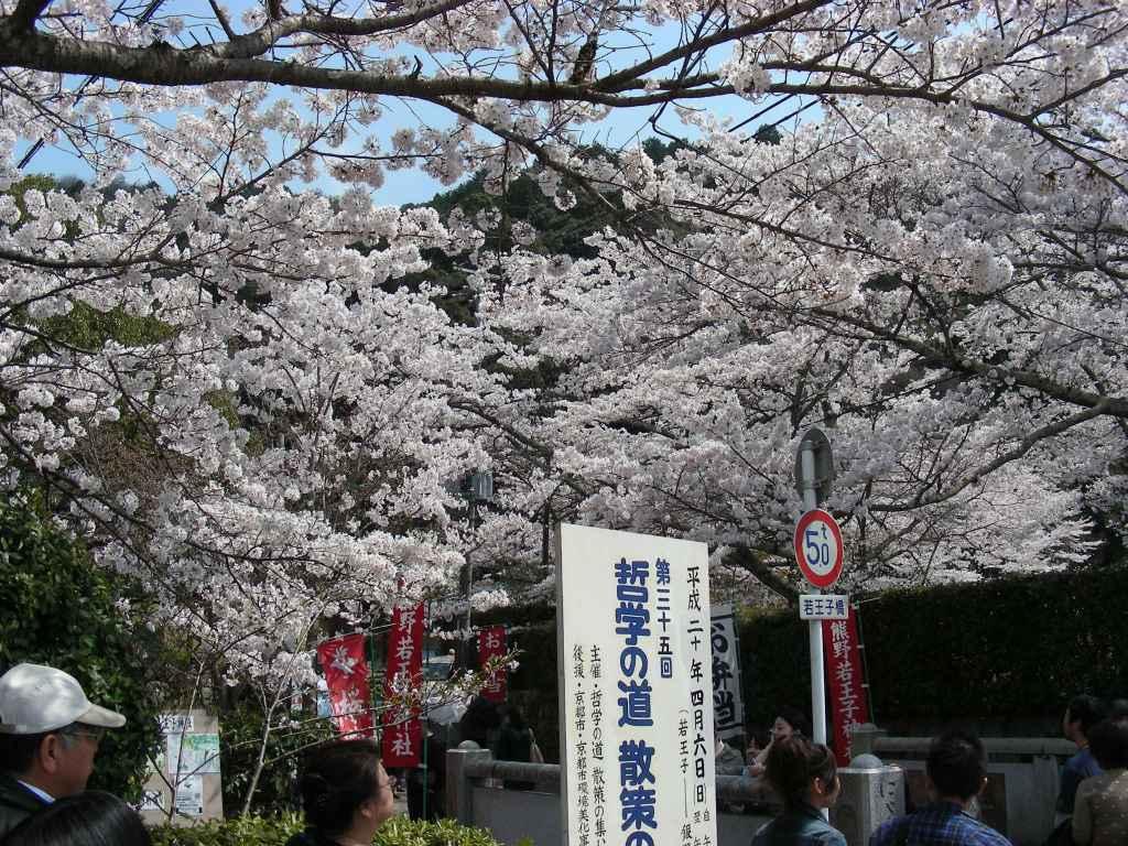 桜・円山、真如、哲学 244
