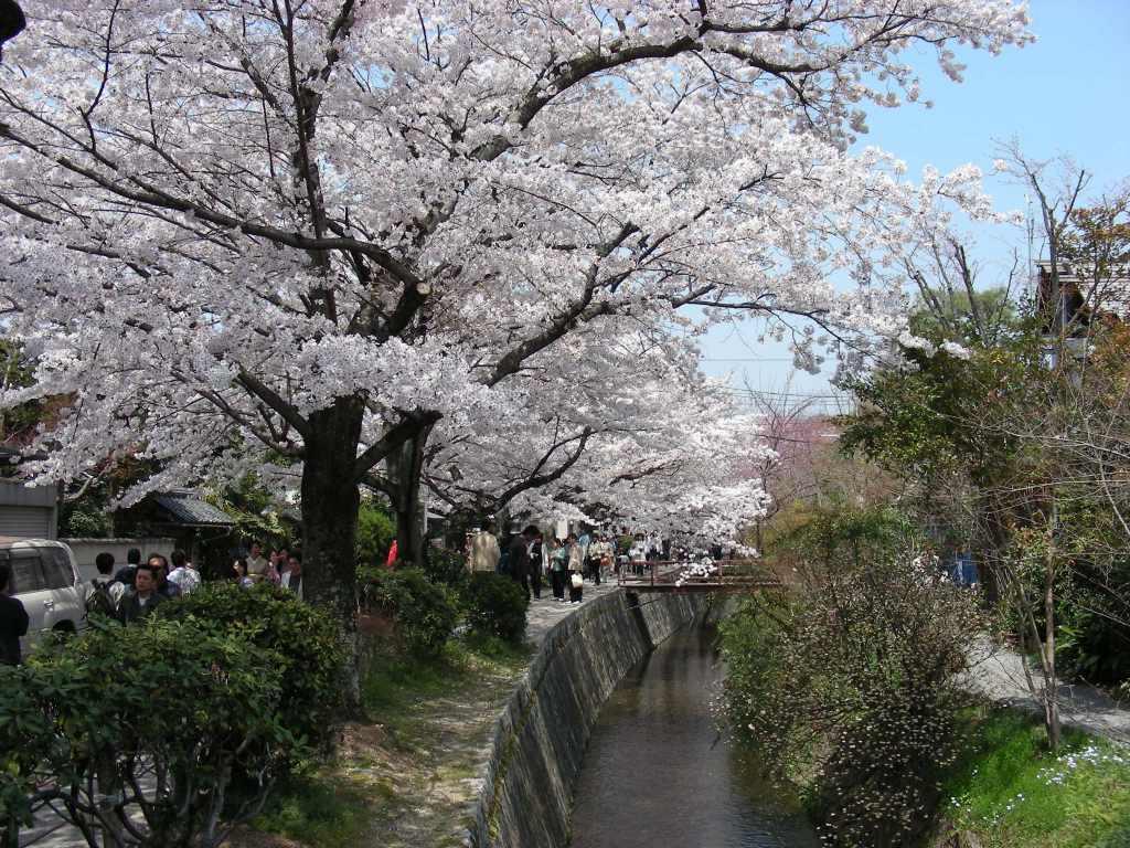 桜・円山、真如、哲学 196
