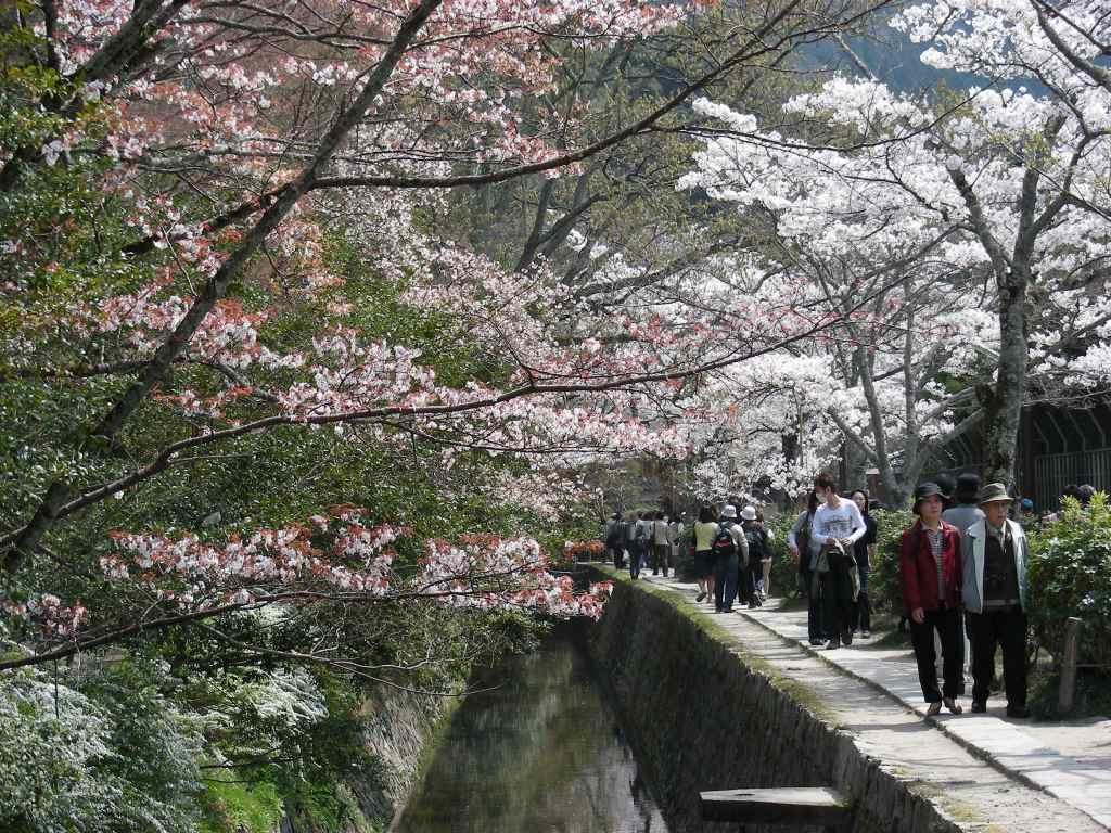 桜・円山、真如、哲学 214