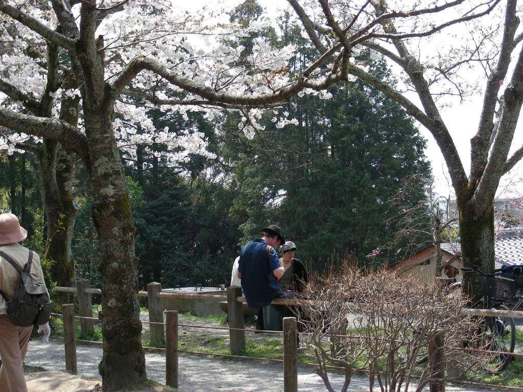 桜・円山、真如、哲学 239