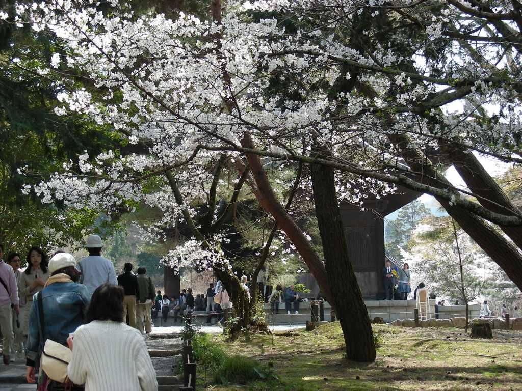 桜・円山、真如、哲学 253