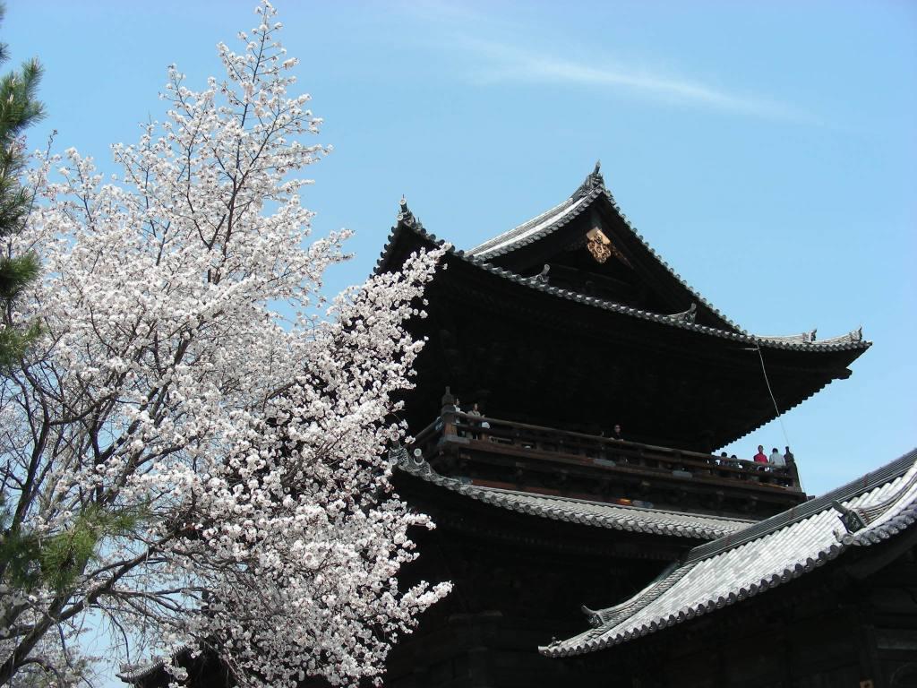 桜・円山、真如、哲学 266