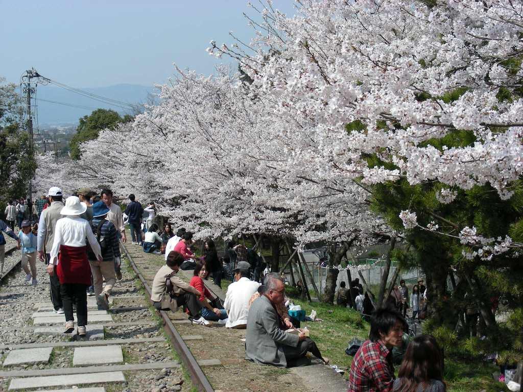 桜・円山、真如、哲学 279