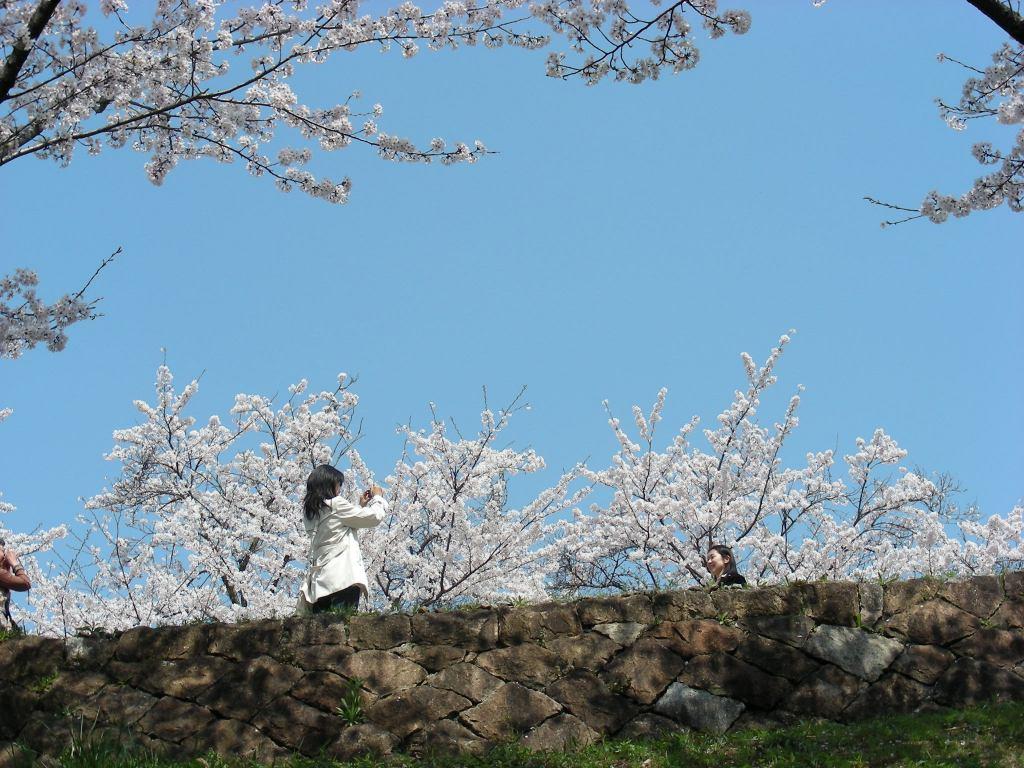 桜・円山、真如、哲学 297