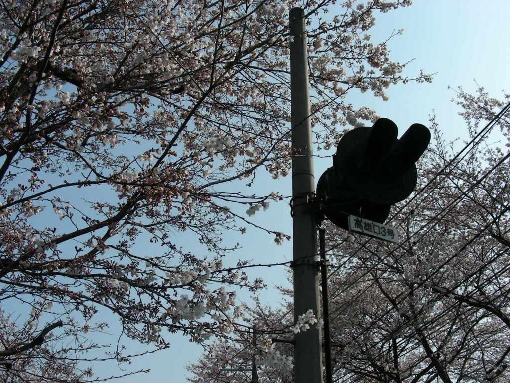 疎水・松ヶ崎・船岡・鳴滝桜 110