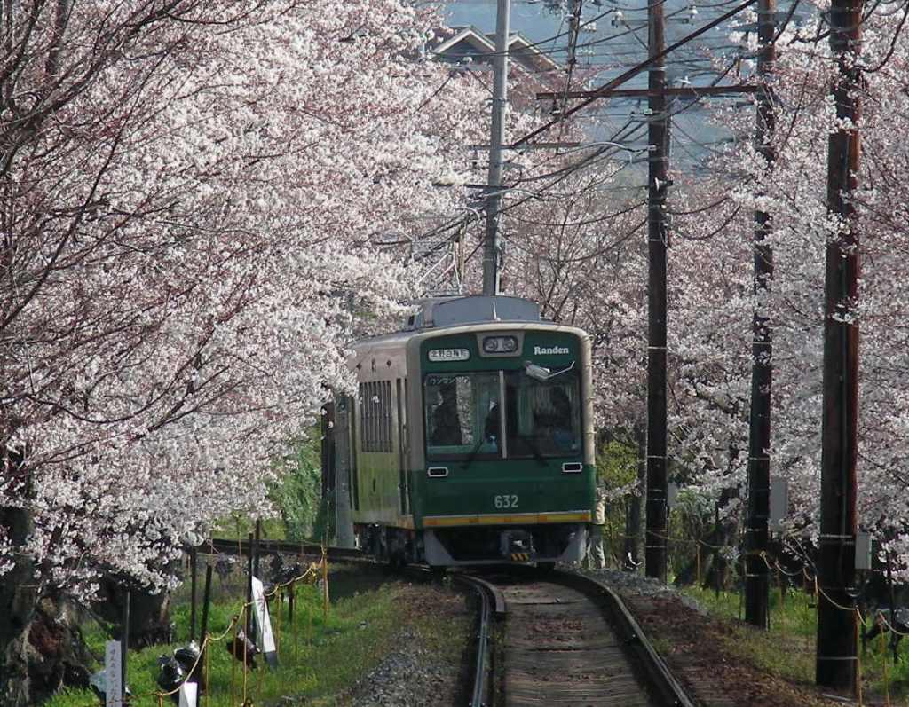 疎水・松ヶ崎・船岡・鳴滝桜 108