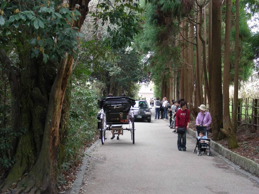 桜大覚寺、二尊院、嵐山 166