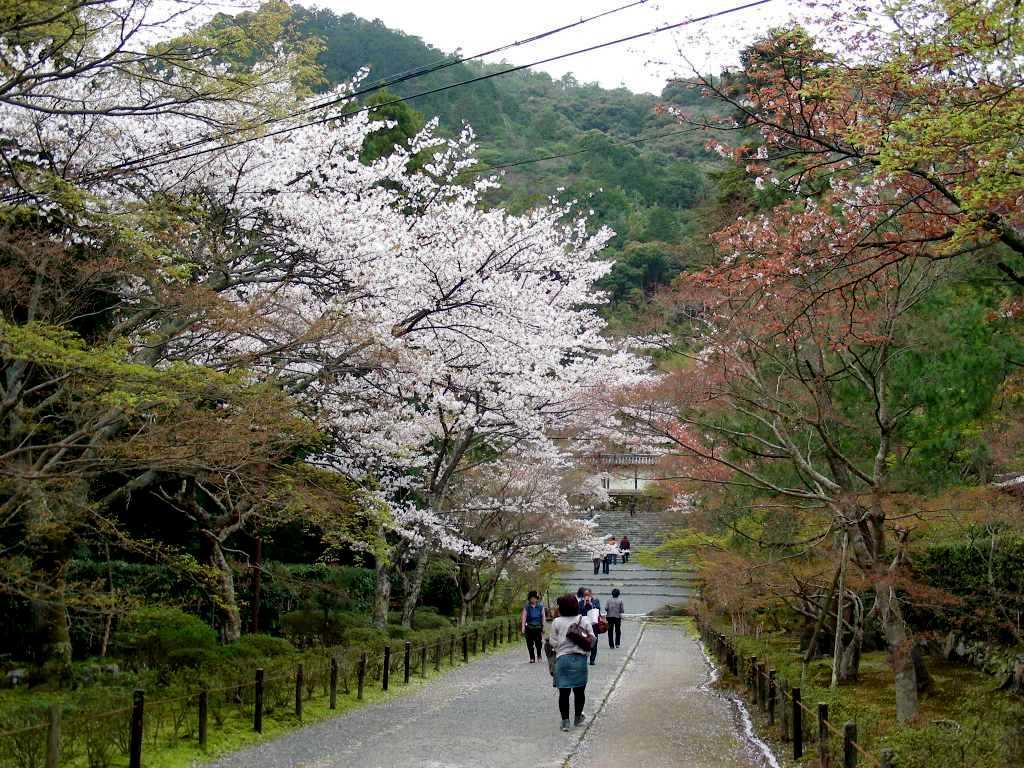 桜大覚寺、二尊院、嵐山 119