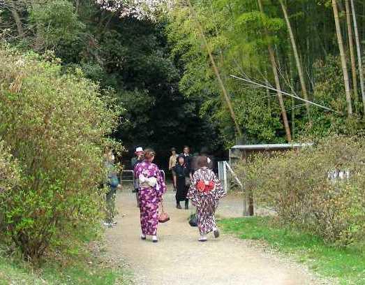 桜大覚寺、二尊院、嵐山 183