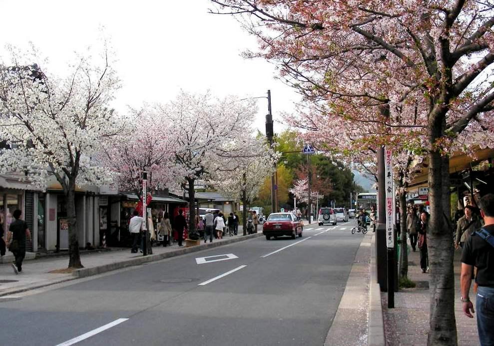 桜大覚寺、二尊院、嵐山 223