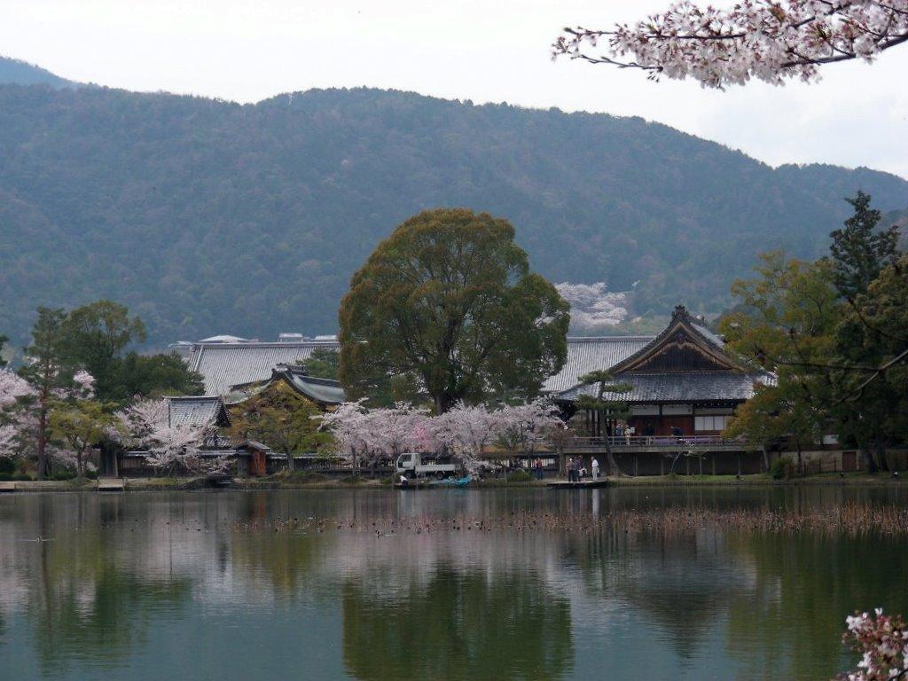 桜大覚寺、二尊院、嵐山 087