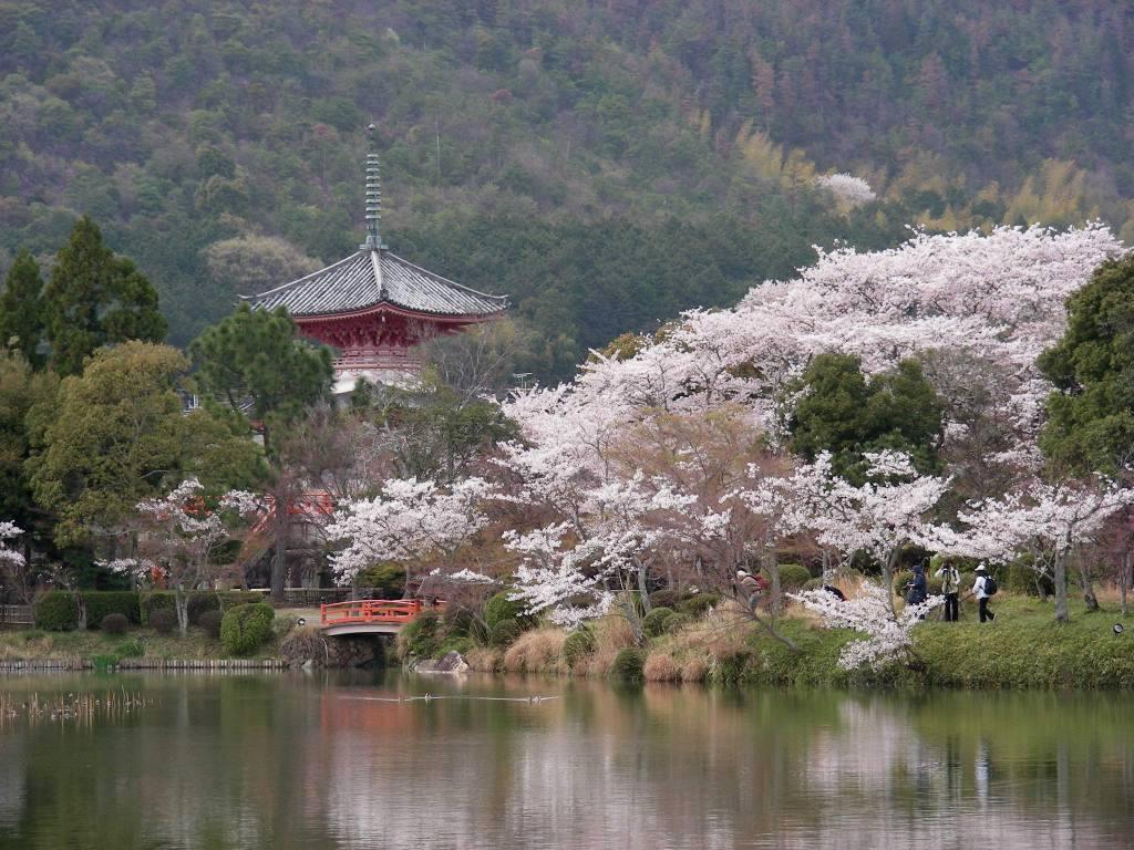 桜大覚寺、二尊院、嵐山 090