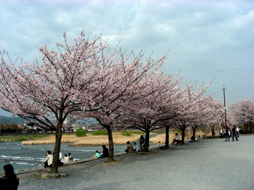 桜大覚寺、二尊院、嵐山 202