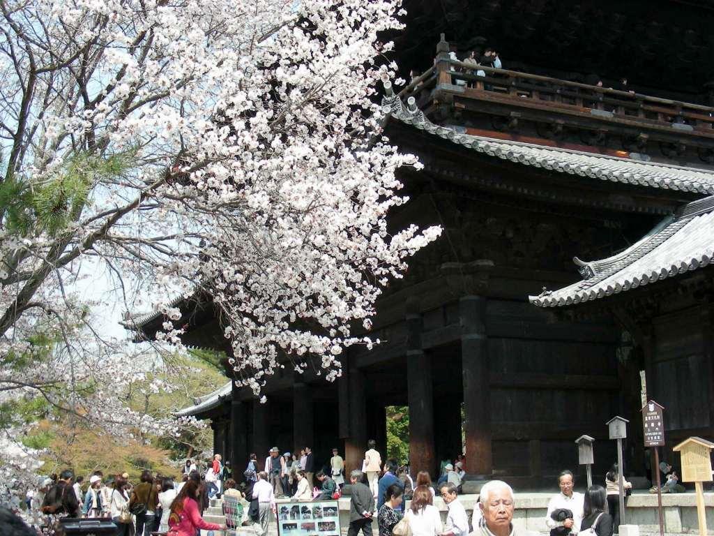 桜・円山、真如、哲学 259