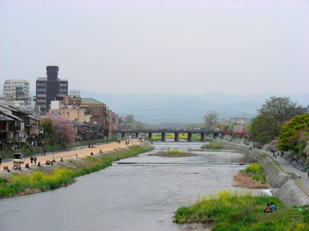祇園桜 048