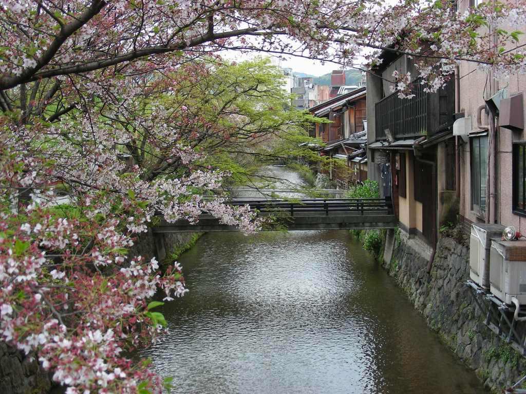 祇園桜 038