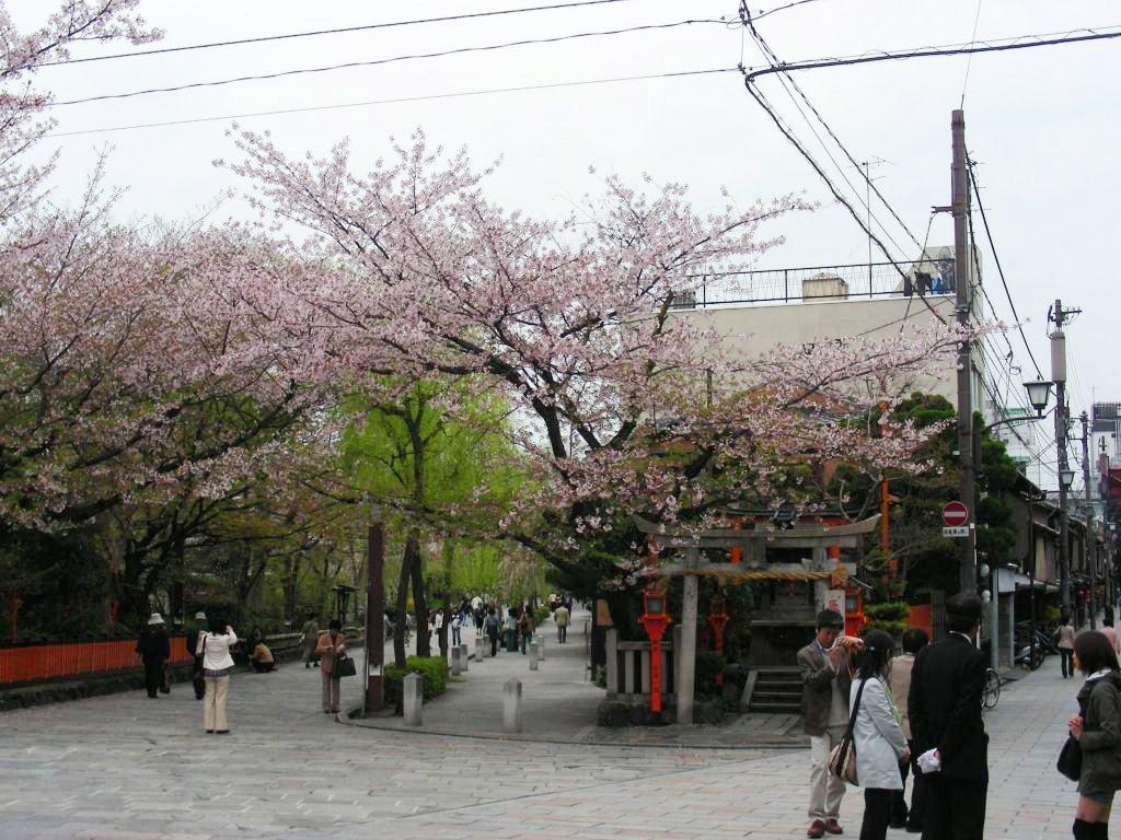 祇園桜 036