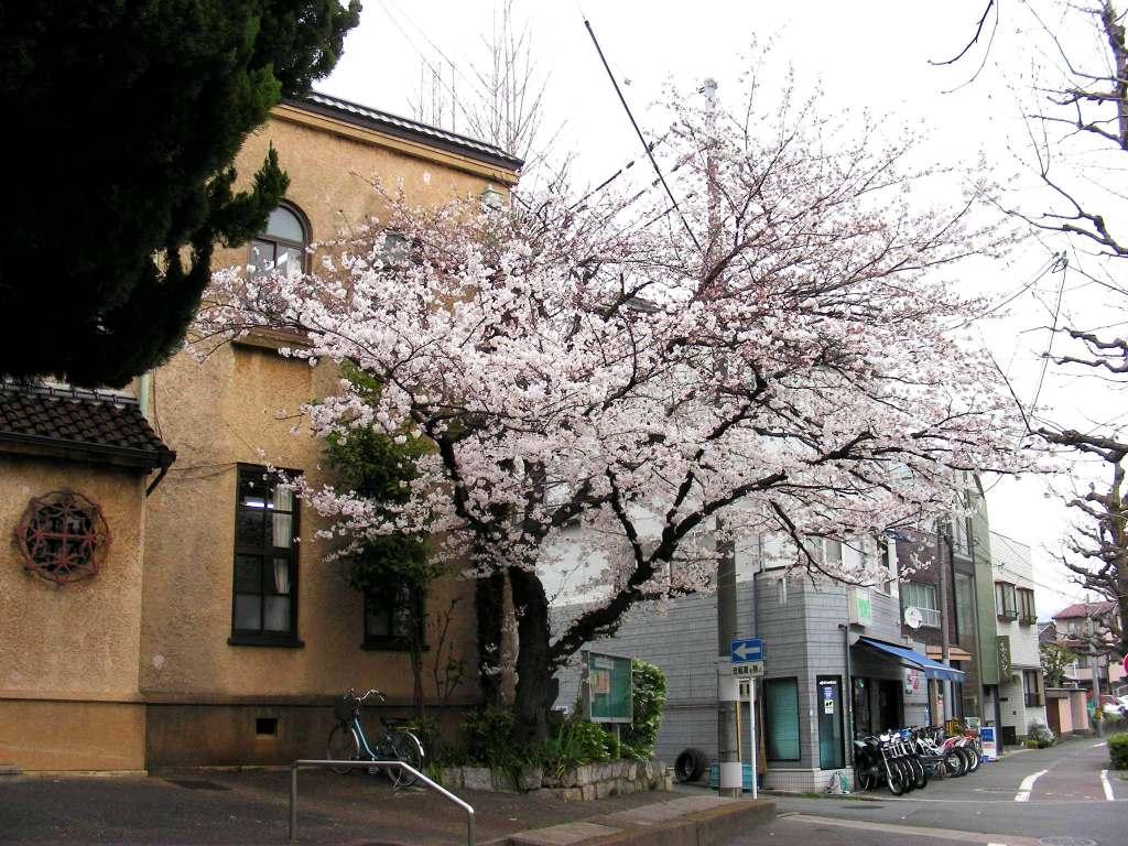 疎水・松ヶ崎・船岡・鳴滝桜 171