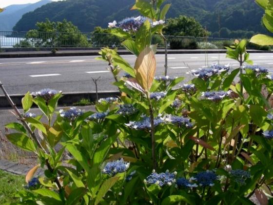 琵琶湖サイクリング 039