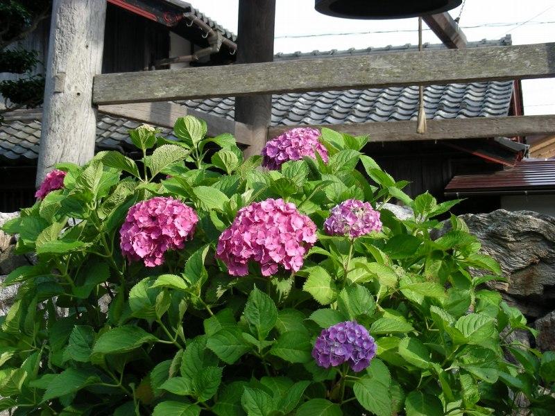 琵琶湖サイクリング 043