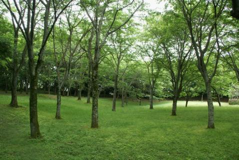 DSC02098公園緑