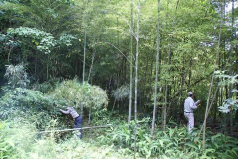 DSC02381竹1