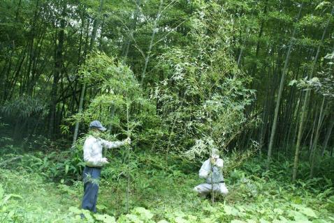 DSC02386竹2