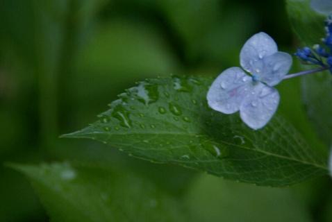 DSC02406雨だれ2