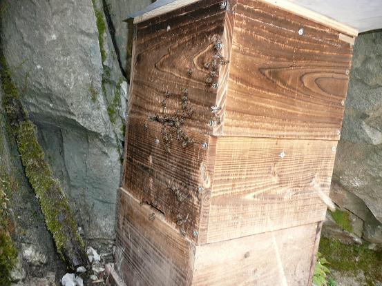 横向きの巣箱
