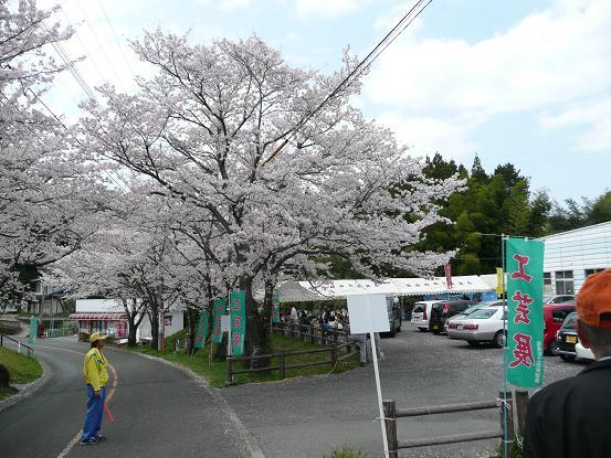 緑川ダムの桜 007