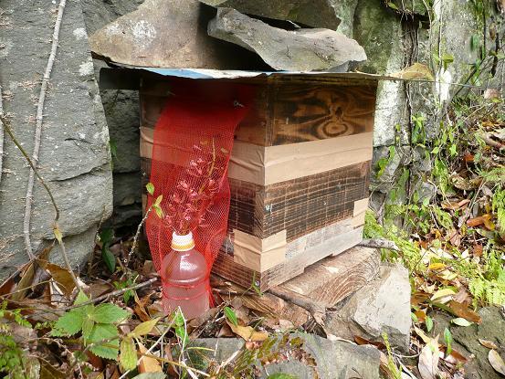 キンと巣箱1