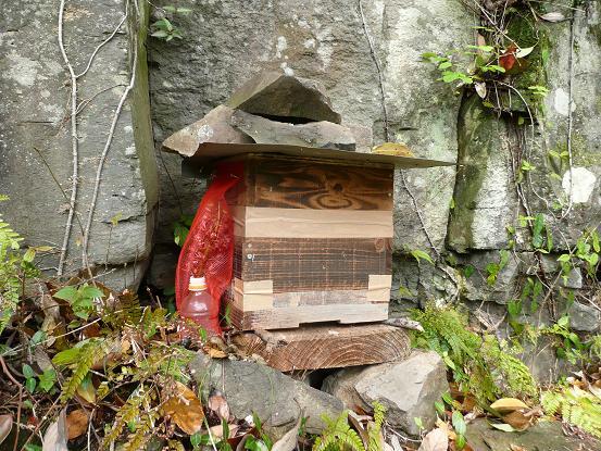 キンと巣箱2