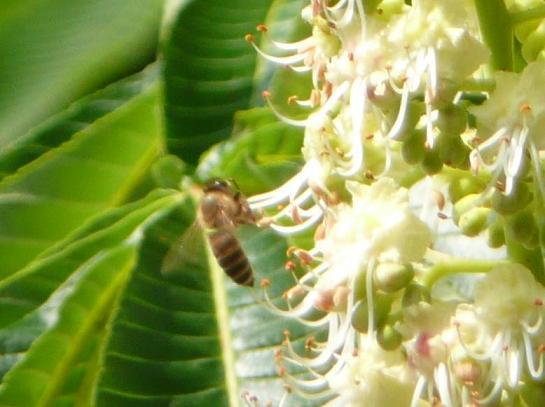 栃とハチ1