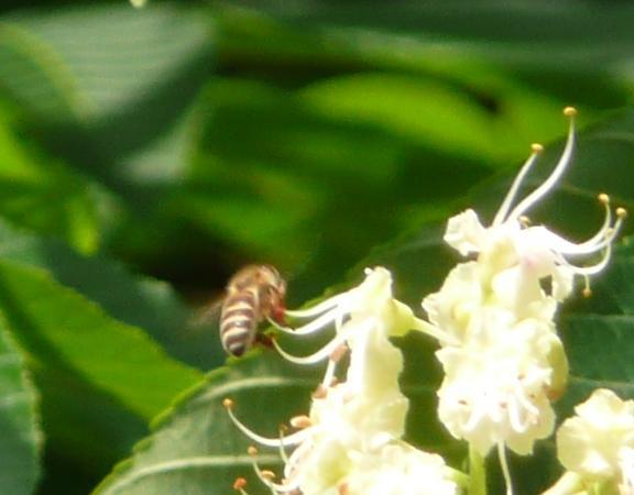 栃とハチ2