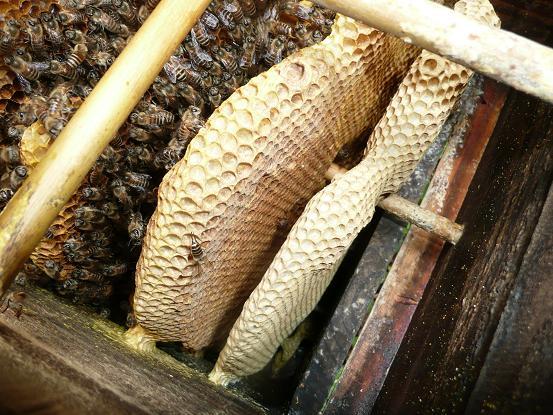 蜂子出し3