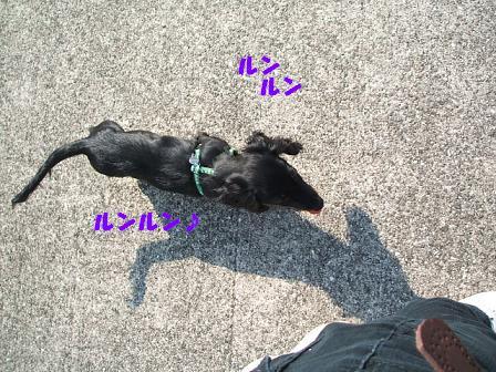 春のお散歩♪ 062