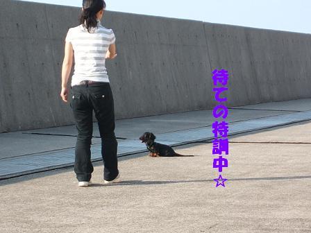 春のお散歩♪ 103