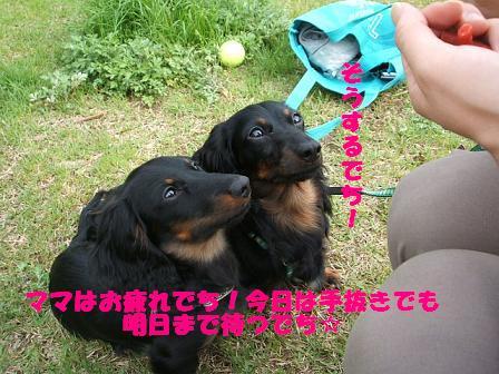3兄弟のお散歩♪ 043