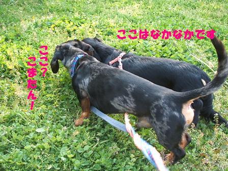 3兄弟のお散歩♪ 091