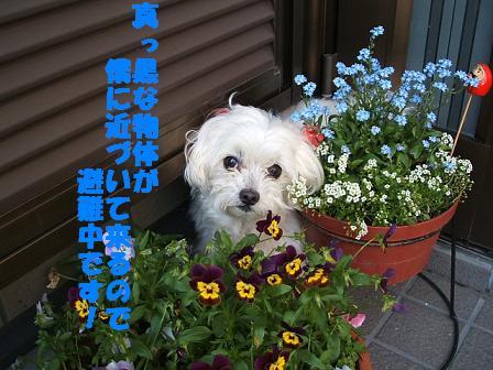 お庭♪ 082