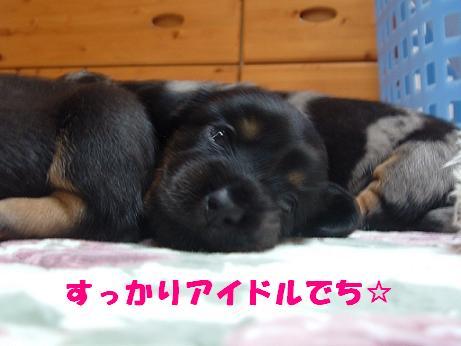 コピー ~ DSCF0558