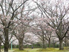 20080407sakura.jpg