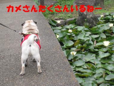 IMG_0686_convert_20080629011036.jpg