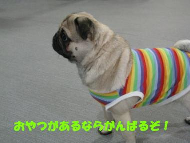 IMG_0705_convert_20080630121130.jpg